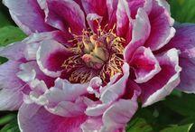 Garden Flowers / by Niki Budai