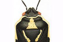DIPLÔME - illustration x naturaliste / évolution de l'illustration naturalistes