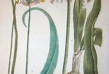 botanika i zoologia_ryciny