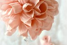 Flowers / by Linda Lipovsky