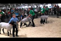 4-H Companion Animals, Livestock & Horses / by Lancaster County