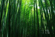14 神奈川 -Kanagawa - / 箱根や鎌倉、横浜などの神奈川の観光地を紹介します。 #japan #kamakura #hakone #yokohama #japantrip