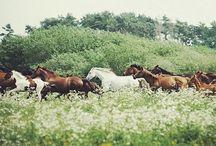 Hästfest