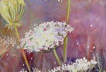 Kwiaty Polne meadow flowers