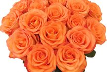 Buy Flowers Online and send it to Baroda, India / Buy flowers online with different colors and fragrance and send it to Baroda. Flowers have a language of their own and with FlowersCakesOnline.com you can easily send flowers to India. You can purchase a flowers vase, flowers bunches and flowers bouquets online according to your choice and budgets.