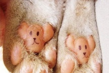 Different Kinds of Paws / These aren't your typical animal paws!