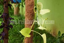 Plant Support Products Manufacturers / www.trellishorticulture.com/plant-supports.php - Our products are 100% Natural plant pole made from natural coir fiber. Use of coir plant pole allows the roots of the creepers to have better grip on the pole when compared to wooden pole and PVC pole.