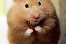 Rodents / Adorable gerbils and others in the Rodentia family.