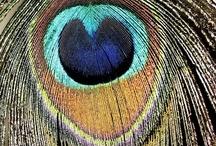 Peacock things