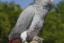 2015 Bird Calendars / by MegaCalendars.com