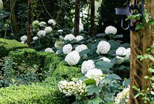 Secret Gardens.... / by Brenda