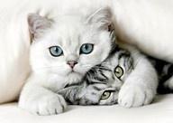 Cuteness! / by Brenda Gold