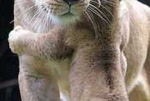 Tierbilder