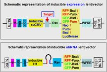 Inducible expression / GenTarget's optional inducible expression - #inducibleexpression #inducible