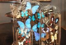 Butterflies in a dome