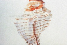 My shell watercolor