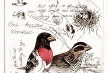 Art and nature journalling