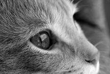 Όμορφες γάτες