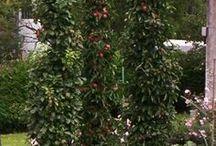 Obst im Garten