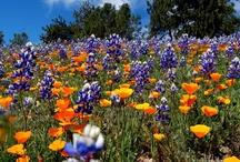 california garden.tracy porter.poetic wanderlust / ..........~ live your poetic wanderlust~ xx tracy porter