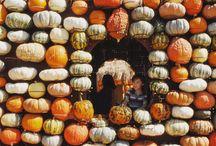 Fall Festivities / All things fall