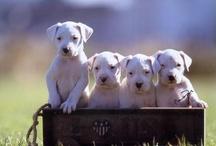 Animais Queridos