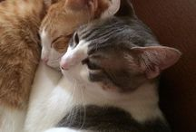 My cats are the best! / Kitties