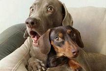 Grappige hondenplaatjes