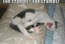 Funny/cute animals / by Brittany Fox