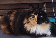 Jasmine / Jasmine est un chat magnifique, avec un regard splendide. Pourtant... elle est aveugle !