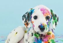 Colorful doggie