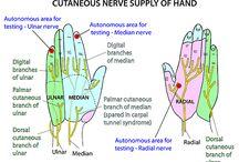 Hånd og skulder