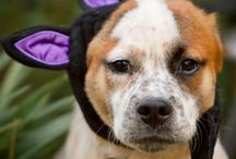 My Dog Roux / Photos of my mutt puppy, Roux the Ruthless. By C Brown Photo Atlanta Pet Photojournalism.