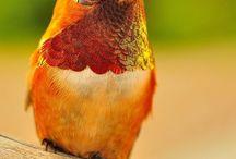 Bird watching time
