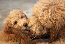Man's Best Friend! :)