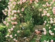 Garden - flower arch