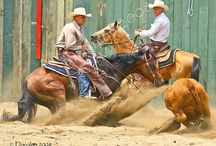 Cutting and Campdrafting