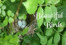 NE - Beautiful Birds / Here are some fun additional ideas to go along with the NaturExplorers Beautiful Birds study! / by Our Journey Westward