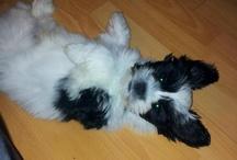 My dog - Rufus