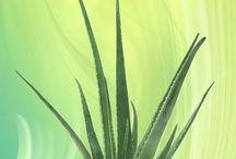 Aloe Vera / by Wendy Utter