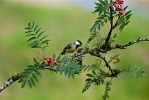 """¡AhORa A buSCaR pájArOS! / """"Solidaria y sonora sociedad de la altura, hojas en libertad, campeones del aire, pétalos del humo, libres, alegres, voladores y cantores, aéreos y terrestres, navegantes del viento, felices constructores de suavísimos nidos, incesantes mensajeros del polen, casamenteros de la flor, tíos de la semilla..."""" (Neruda)"""