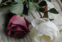 Rose e fiori