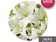 Point Piper Florist /  Lily Florist Point Piper has a very wide range of amazingly long lasting and cutting edge flowers designs which will amaze and bring smiles to anyone you plan on sending flowers to. http://pointpiperflorist.com.au