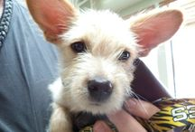 Our Clients / Pictures of our wonderful furry clients as they visit us here at Rocklin Road Animal Hospital.