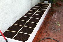 Vegetable garden - sebze bahçeleri