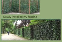 PRIVACY HEDGES