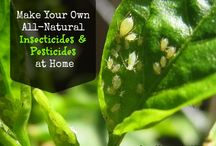 All Natural Insecticide & Pesticide