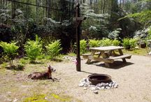 RV Parks and Campground / Our favorite RV Parks from around the US.