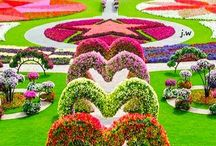 Flower gardens / Flowers Gardens Colors