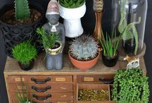 Plantes grasses et cactus